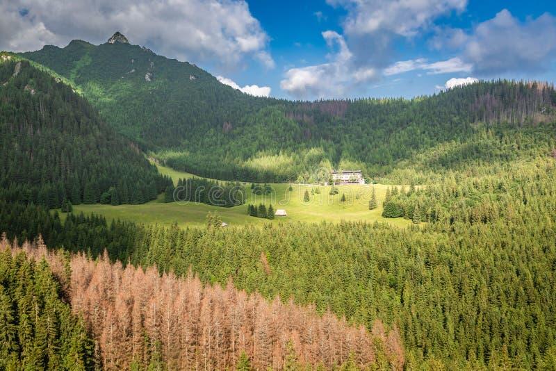 Bosque verde en la salida del sol en la opinión de Tatras del teleférico fotos de archivo