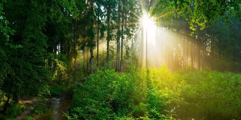 Bosque verde en resorte fotos de archivo libres de regalías