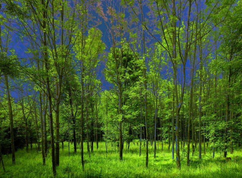 Bosque verde enorme el d?a de primavera fotos de archivo