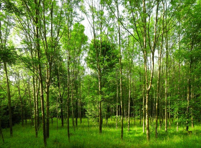 Bosque verde enorme el d?a de primavera imagenes de archivo