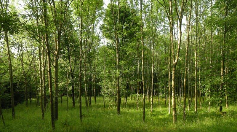 Bosque verde fresco en la luz del d?a de la primavera imagen de archivo