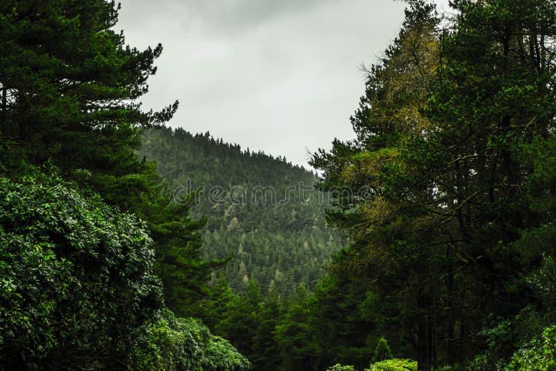 Bosque verde, Irlanda fotografía de archivo libre de regalías