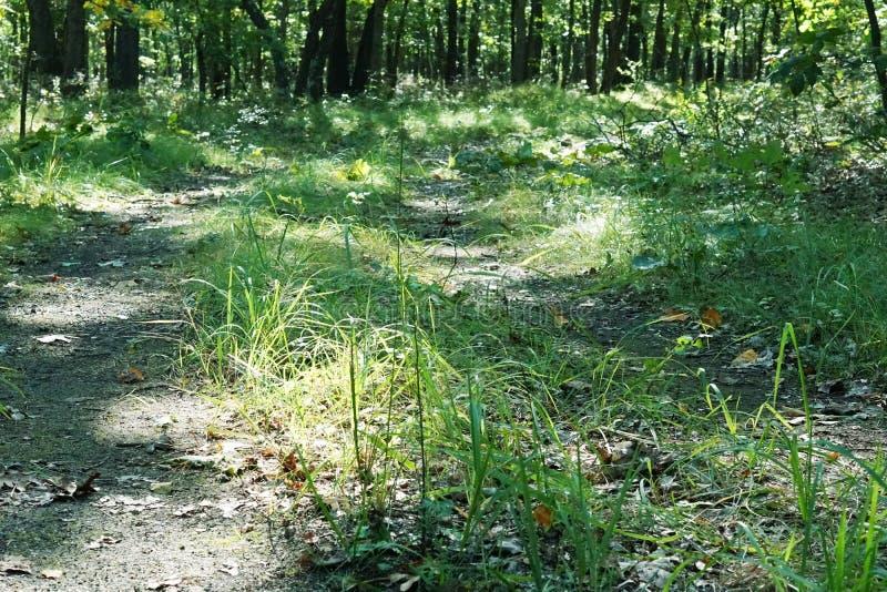 Bosque verde soleado con la sombra foto de archivo libre de regalías