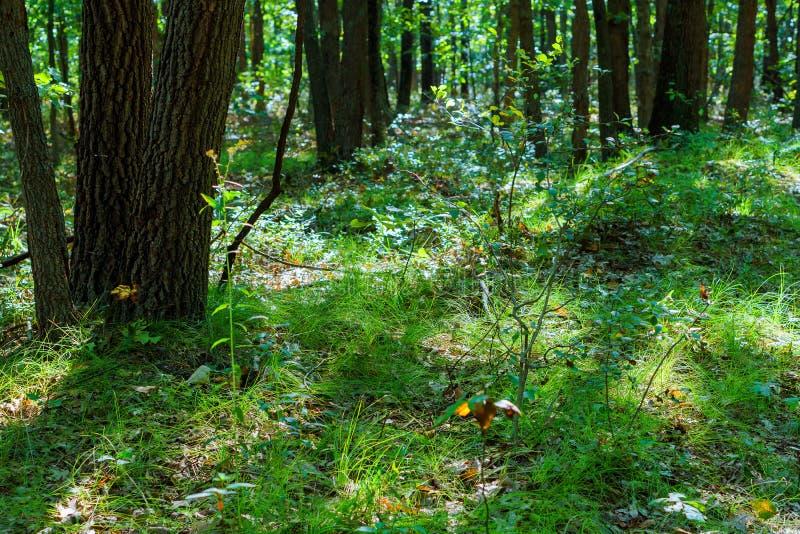 Bosque verde soleado con la sombra imagen de archivo