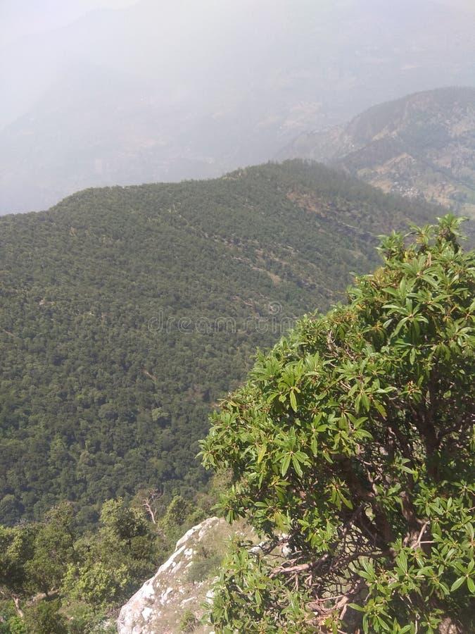 Bosque verde y pequeños pueblos con la naturaleza verde imágenes de archivo libres de regalías