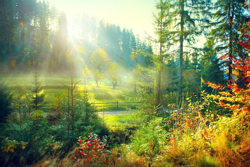 Bosque viejo brumoso y prado de la mañana hermosa en campo imagen de archivo