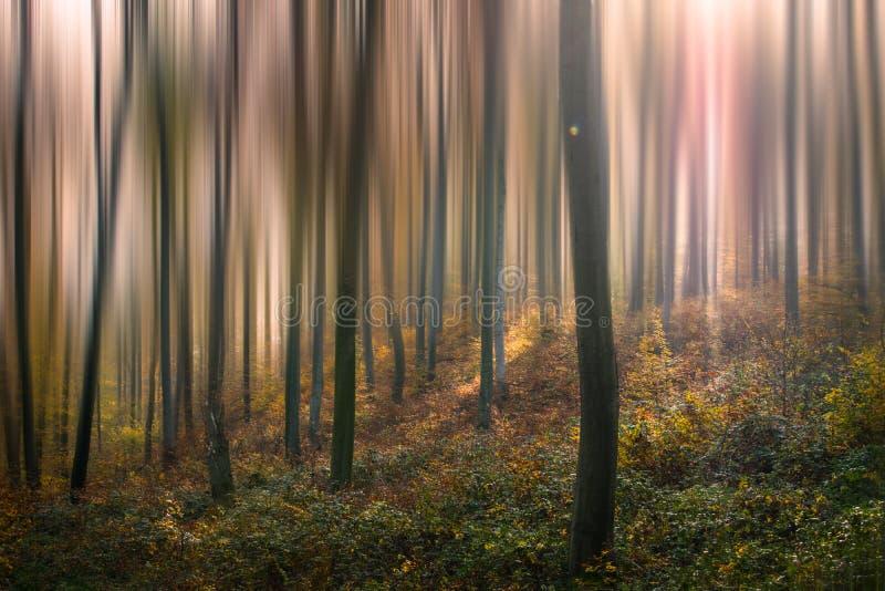 Bosque VII del cuento fotos de archivo