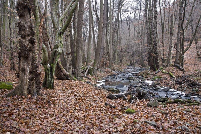 Bosque y cala del otoño foto de archivo libre de regalías