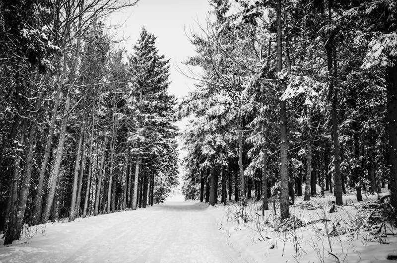 Bosque y camino del invierno bajo monocromo de la nieve imagen de archivo