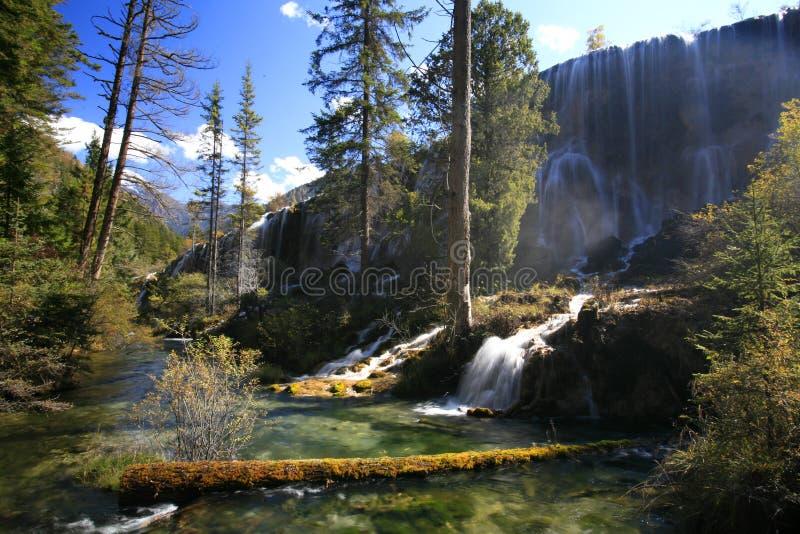 Bosque y cascadas foto de archivo libre de regalías