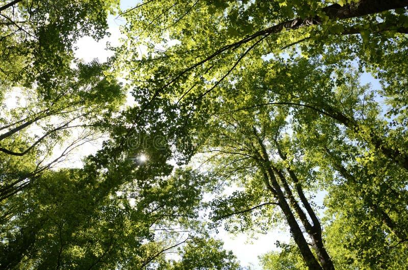 Bosque y cielo de Great Smoky Mountains fotografía de archivo