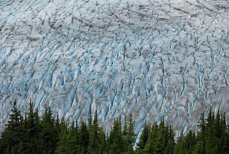 Bosque y glaciar foto de archivo