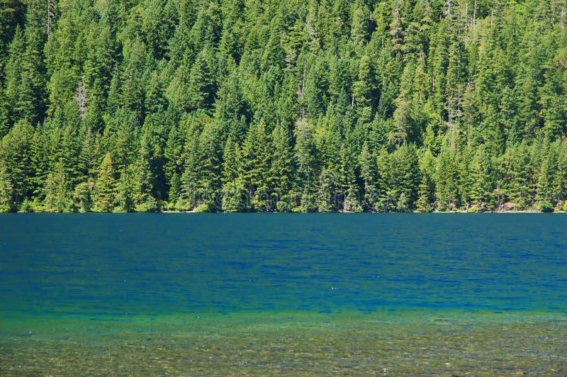 Download Bosque y lago foto de archivo. Imagen de outdoors, profundamente - 1284810