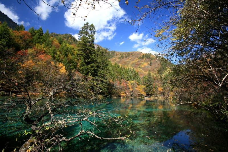 Bosque y lago imagen de archivo