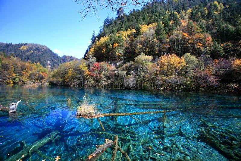 Bosque y lago fotos de archivo libres de regalías