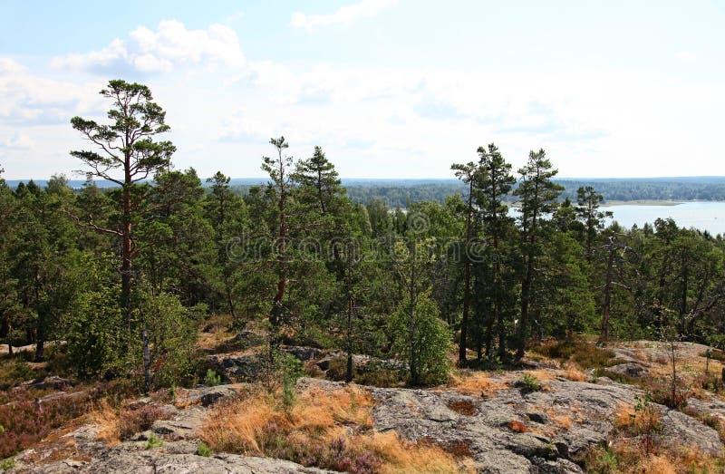 Bosque y lago imagen de archivo libre de regalías
