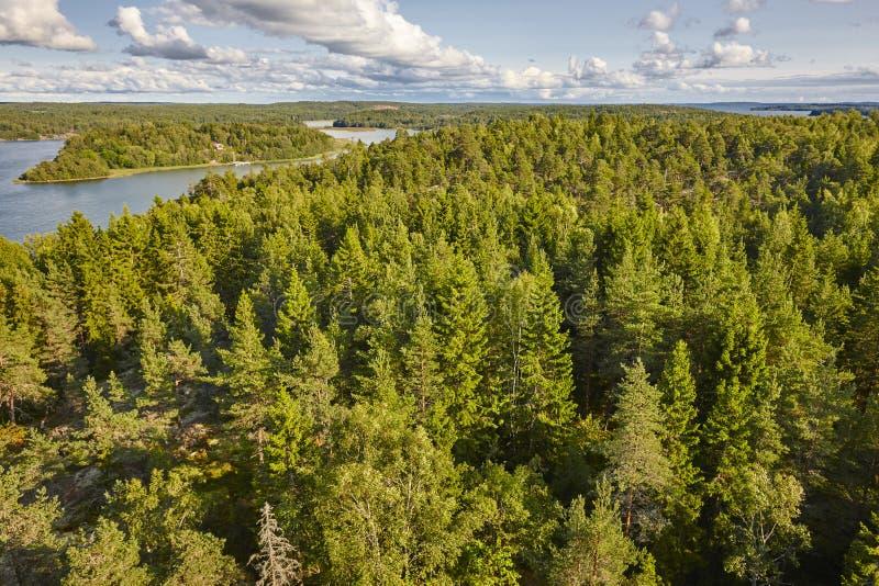 Bosque y lagos de madera de pino en Finlandia Fondo de la naturaleza foto de archivo