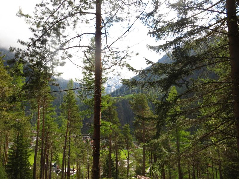 Bosque y montañas foto de archivo