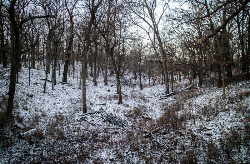 Bosque y nieves imagen de archivo libre de regalías