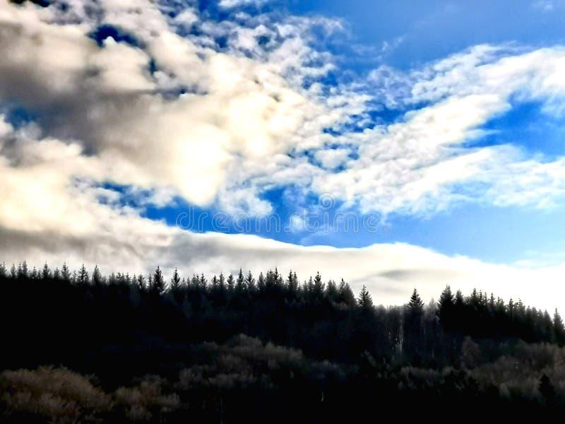 Bosque y nubes coníferos oscuros imagen de archivo