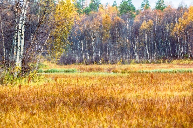 Bosque y pantano, falda del otoño del bosque fotografía de archivo libre de regalías