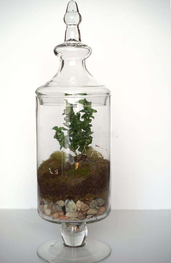 Bosque y prado minúsculos en un tarro foto de archivo libre de regalías