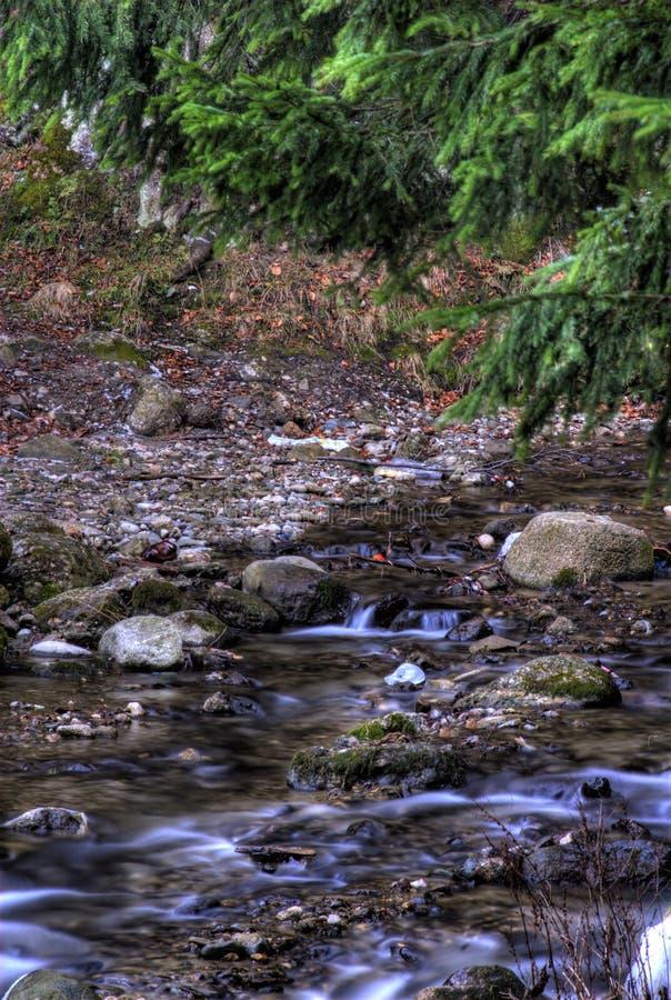 Bosque y río foto de archivo