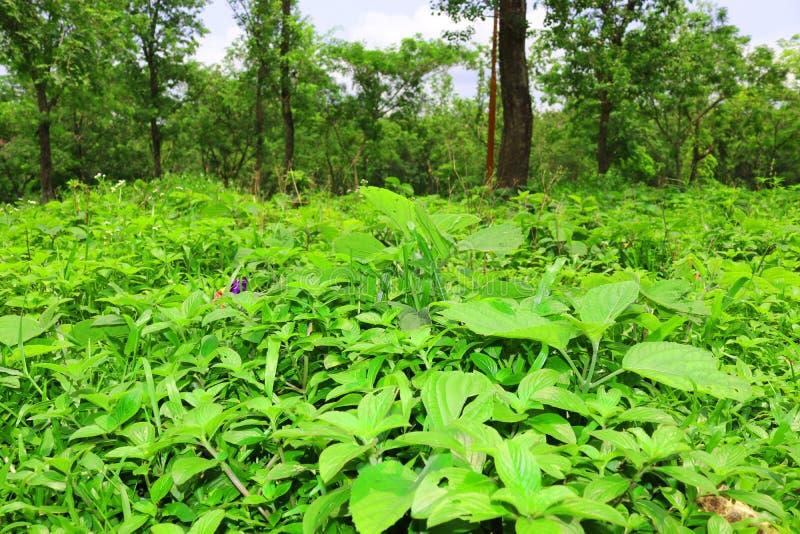 Bosque y ?rbol verde de la selva Paisaje natural hermoso Selvas tropicales profundas Autumn Landscape Fondo de la ca?da Luz del s imagen de archivo libre de regalías