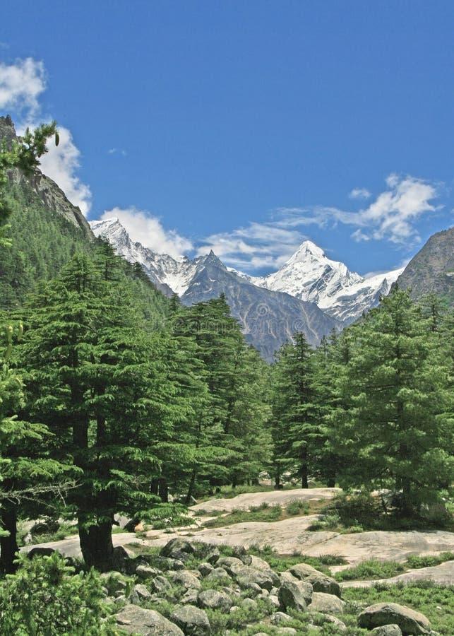 Bosque y valle himalayan verdes enormes la India uttaranchal fotos de archivo libres de regalías