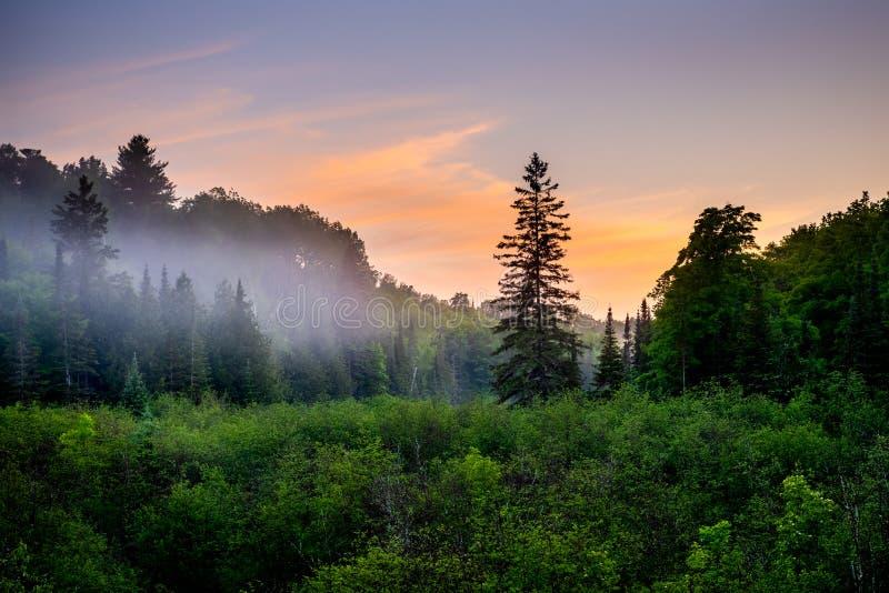 Bosque y vegetación salvaje en la puesta del sol fotos de archivo