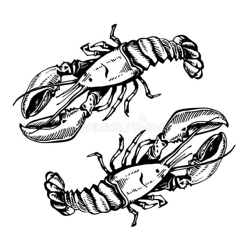 Bosqueje el ejemplo de la langosta, cangrejo, cangrejos En el fondo blanco imagenes de archivo