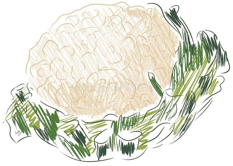 Bosquejo aislado de la coliflor stock de ilustración