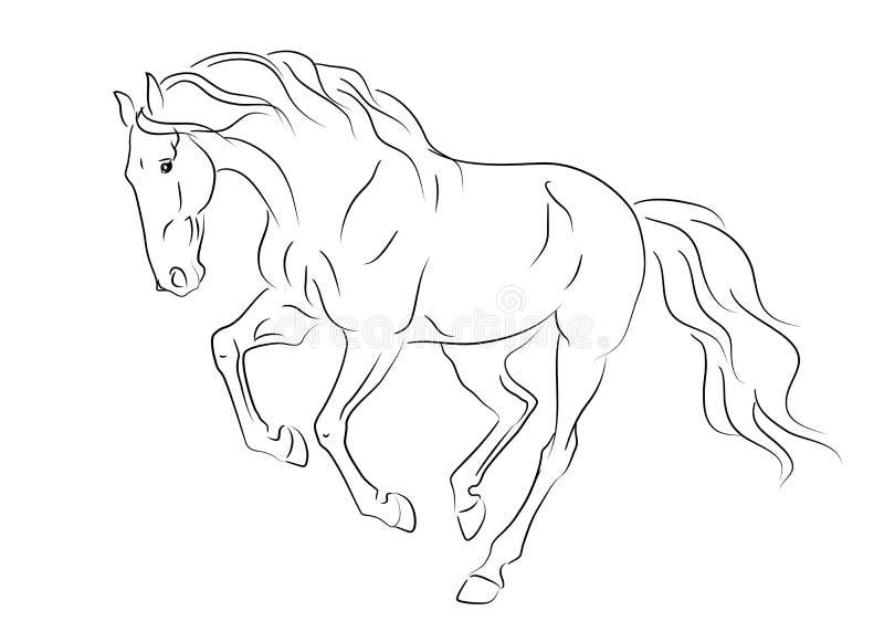 Bosquejo andaluz corriente del caballo stock de ilustración