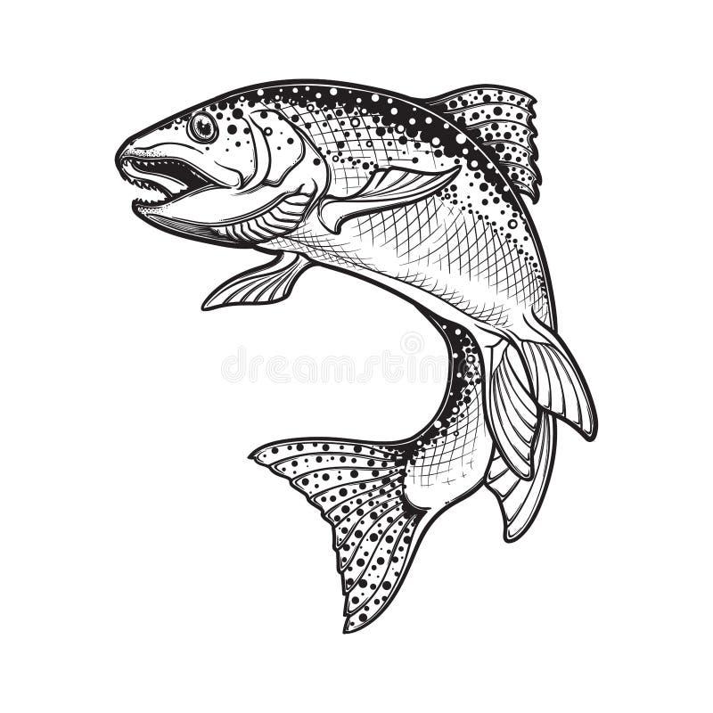 Bosquejo blanco y negro de la trucha arco iris ilustración del vector