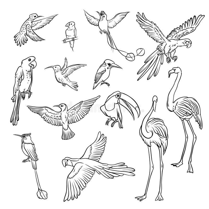 Bosquejo blanco y negro del vector fijado dibujado a mano Colección de pájaros tropicales exóticos Dibujo de esquema aislado una  ilustración del vector