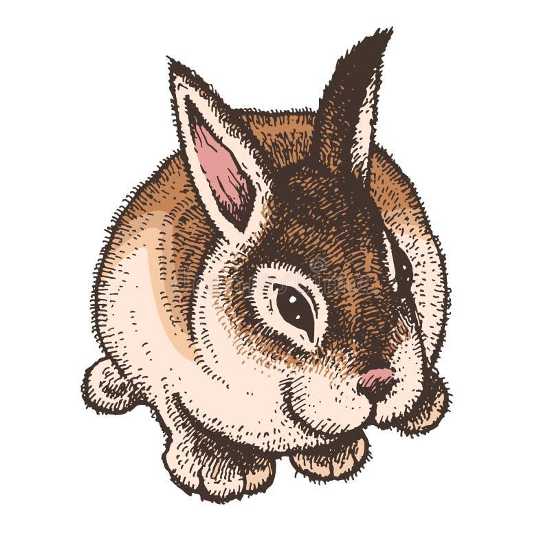 Bosquejo coloreado dibujado mano del conejo de pascua stock de ilustración