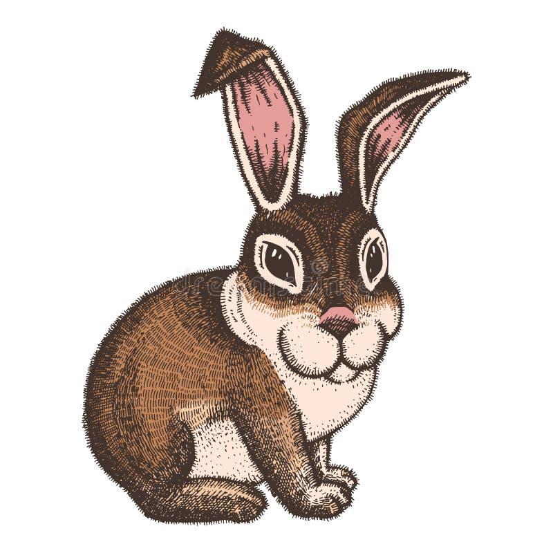 Bosquejo coloreado dibujado mano del conejo de pascua libre illustration