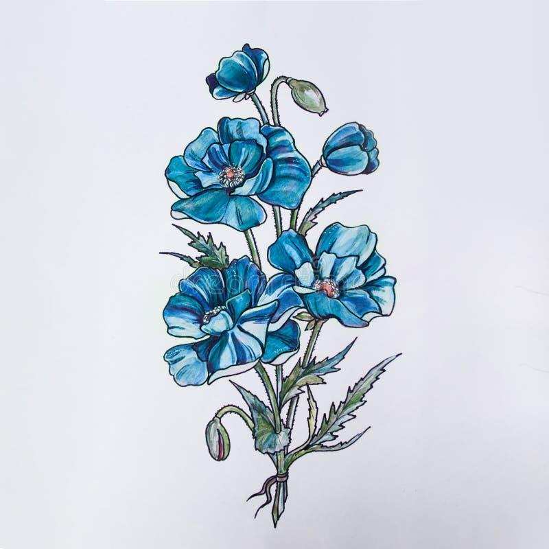 Bosquejo de flores hermosas en un fondo blanco fotos de archivo