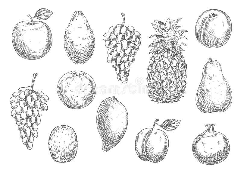 Bosquejo de frutas vegetarianas en estilo retro libre illustration