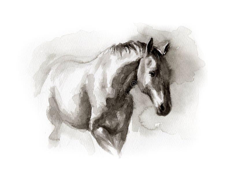 Bosquejo de la acuarela del caballo fotografía de archivo libre de regalías
