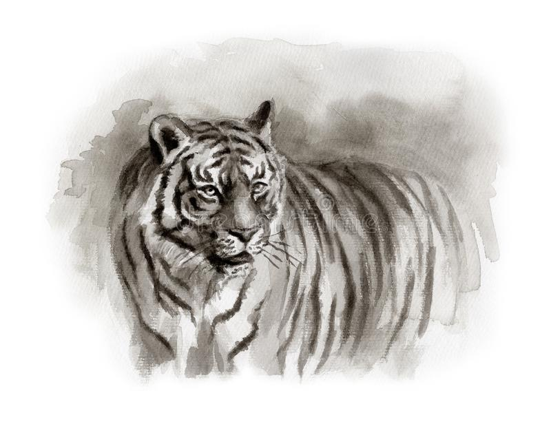 Bosquejo de la acuarela del tigre fotos de archivo libres de regalías