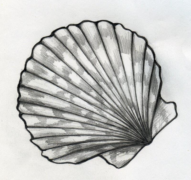 Bosquejo de la cáscara del mar stock de ilustración