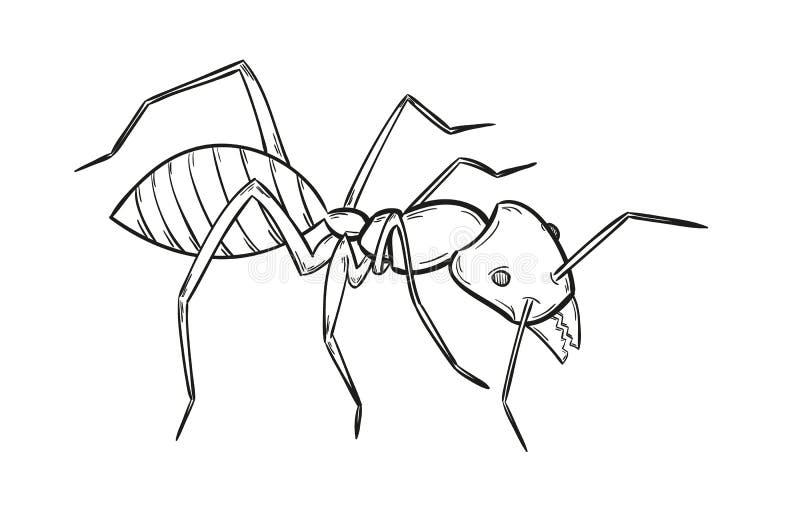 Bosquejo de la hormiga stock de ilustración