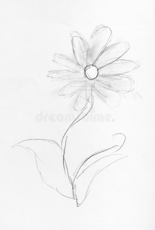 Bosquejo de la mano de la flor fresca dibujada por el lápiz negro libre illustration