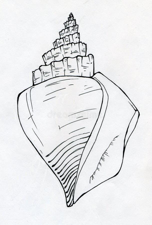Bosquejo de la tinta de la cáscara del mar ilustración del vector