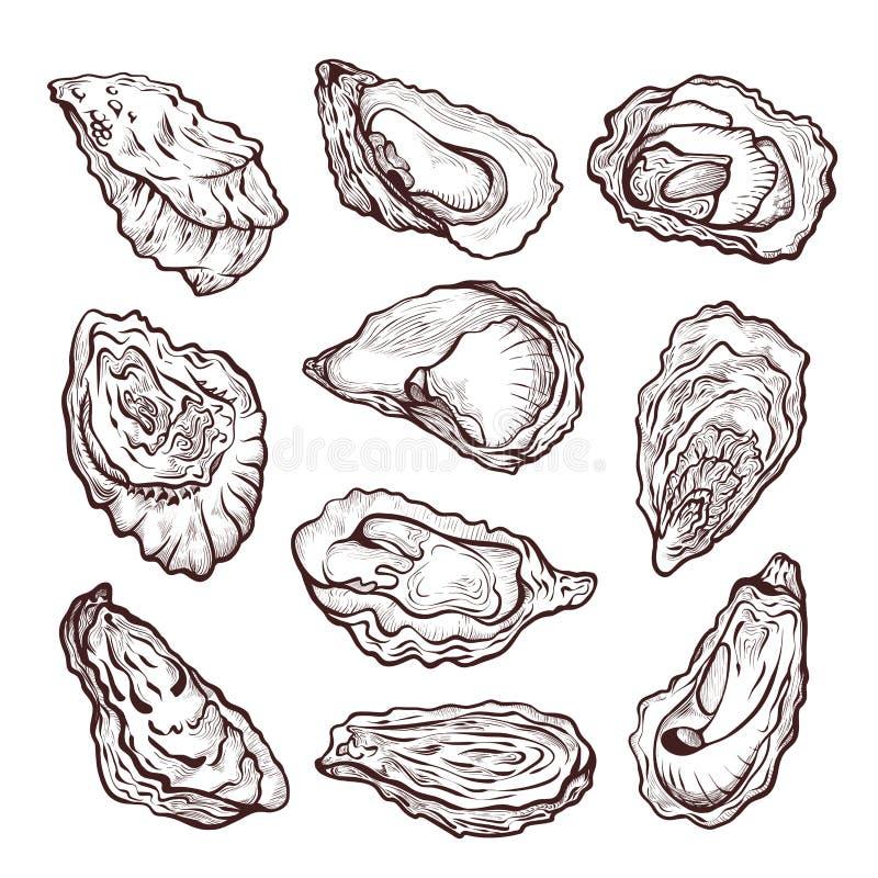 Bosquejo de los crustáceos del mar de la ostra, sistema del dibujo de lápiz stock de ilustración