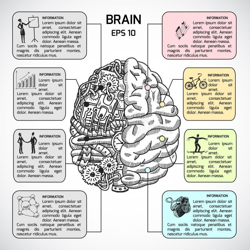 Bosquejo de los hemisferios del cerebro infographic ilustración del vector