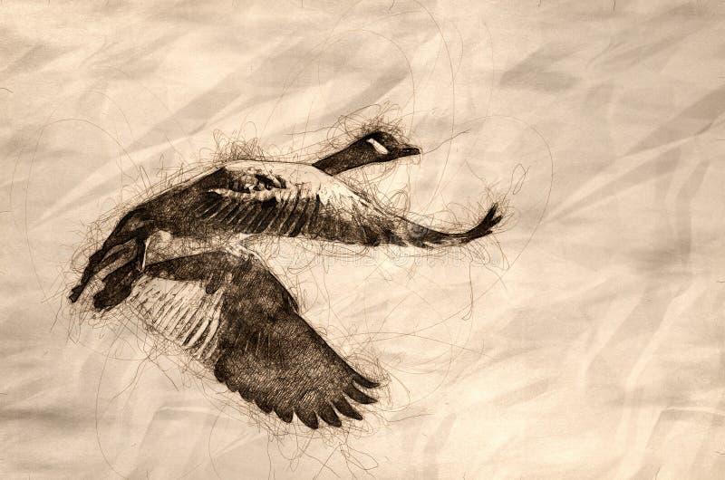 Bosquejo de un vuelo solitario del ganso de Canad? en un cielo azul stock de ilustración