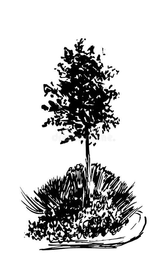 Bosquejo del árbol Ejemplo del vintage, estilo grabado Tinta dibujada mano Dibujo lineal trasero aislado en el fondo blanco Para  ilustración del vector