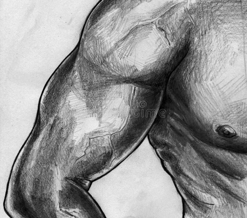 Bosquejo del bíceps y del torso libre illustration